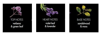 English Fern & Sandalwood Notes